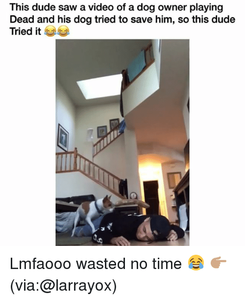Dude, Funny, and Saw: This dude saw a video of a dog owner playing  Dead and his dog tried to save him, so this dude  Tried it Lmfaooo wasted no time 😂 👉🏽(via:@larrayox)