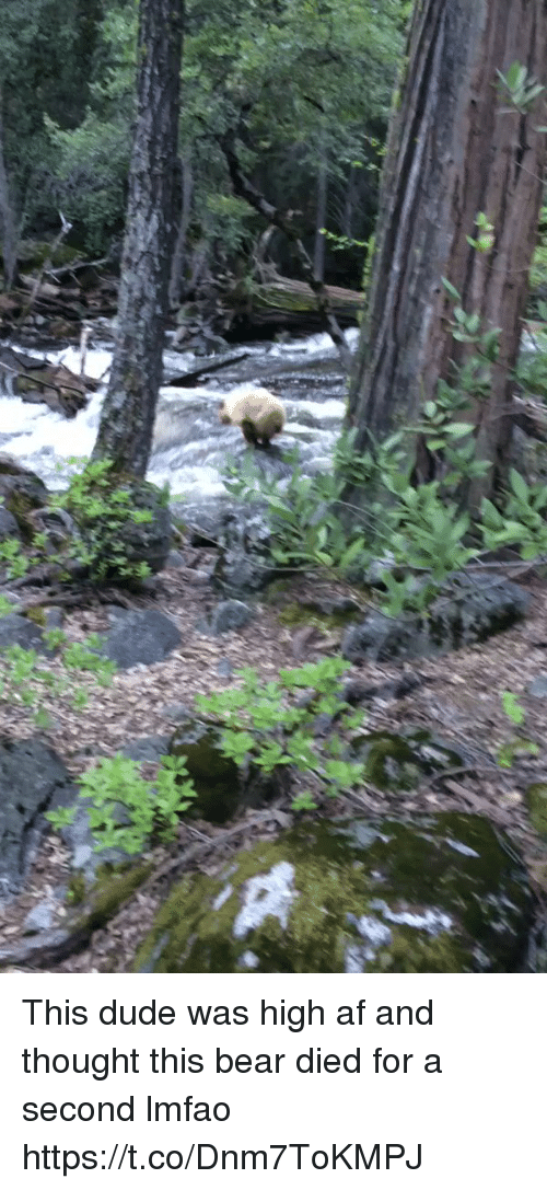 Af, Dude, and Funny: This dude was high af and thought this bear died for a second lmfao https://t.co/Dnm7ToKMPJ
