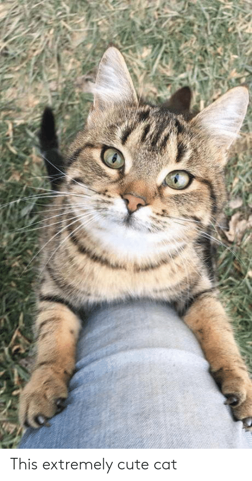 cute cat: This extremely cute cat