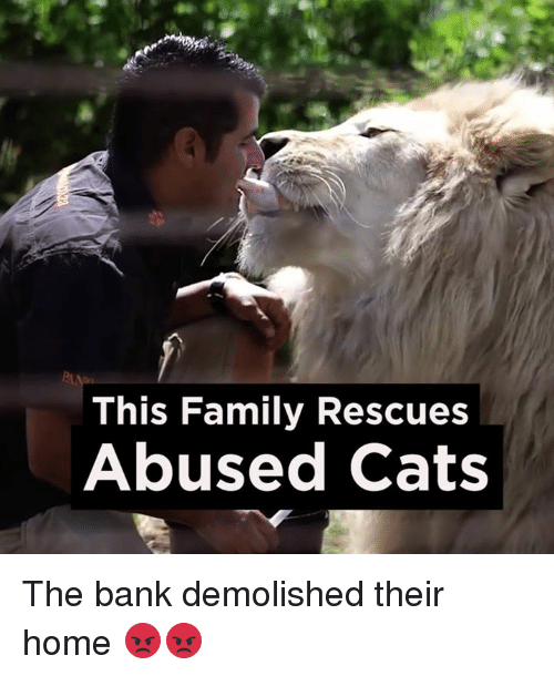 Dank and 🤖: This Family Rescues  Abused Cats The bank demolished their home 😡😡