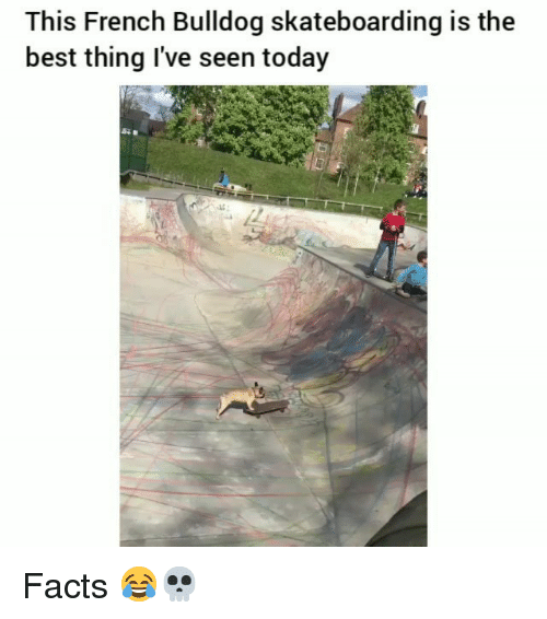 french bulldog: This French Bulldog skateboarding is the  best thing I've seen today Facts 😂💀