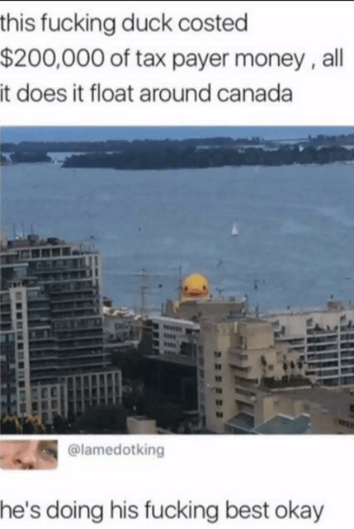 tax: this fucking duck costed  $200,000 of tax payer money, all  it does it float around canada  @lamedotking  he's doing his fucking best okay