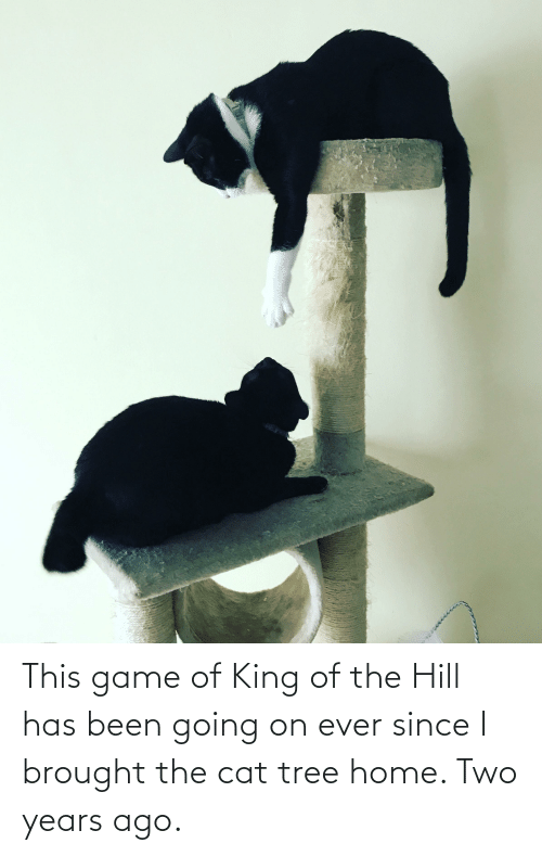 King Of: This game of King of the Hill has been going on ever since I brought the cat tree home. Two years ago.