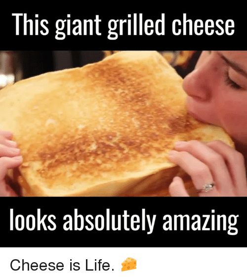 Memes, Giant, and Giants: This giant grilled cheese  looks absolutely amazing Cheese is Life. 🧀