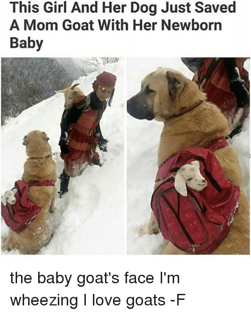 Baby Goats: This Girl And Her Dog Just Saved  A Mom Goat With Her Newborn  Baby the baby goat's face I'm wheezing I love goats -F