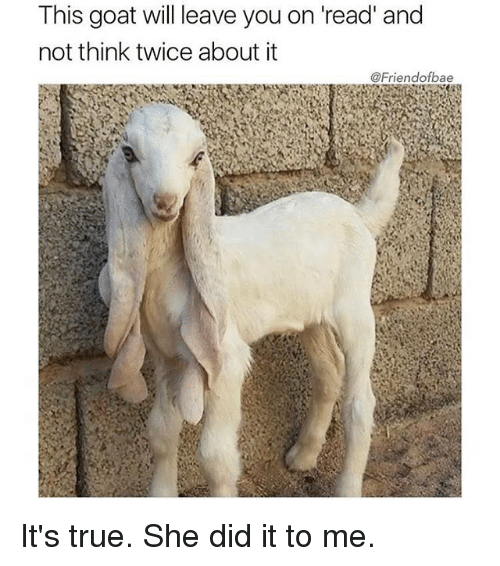 Funny, True, and Goat: This goat will leave you on 'read' and  not think twice about it  @Friendofbae It's true. She did it to me.
