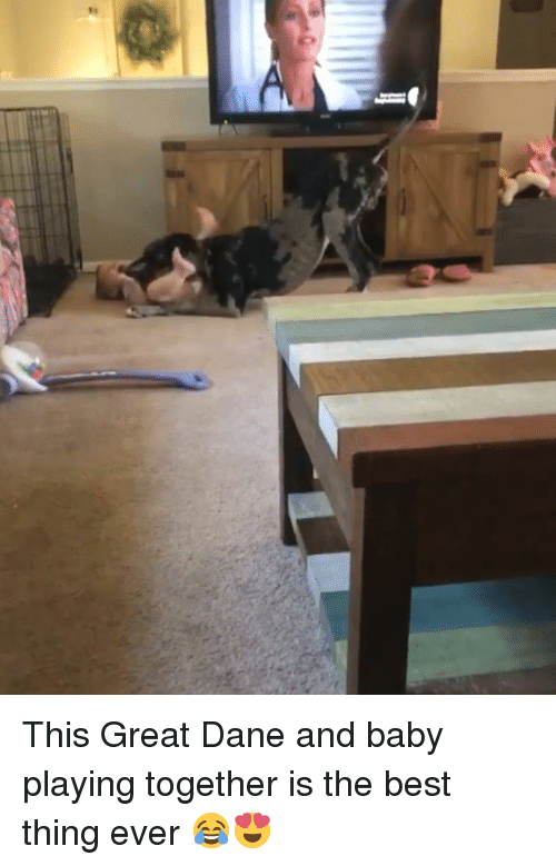 great dane: This Great Dane and baby playing together is the best thing ever 😂😍