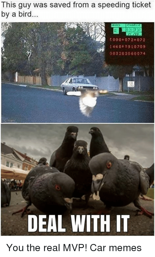 Cars, Speed, and Mvp: This guy a saved from a speeding ticket  by a bird  E 000 07 2 07 2  44 00 910 709  00320 20600 74  DEAL WITH IT You the real MVP! Car memes