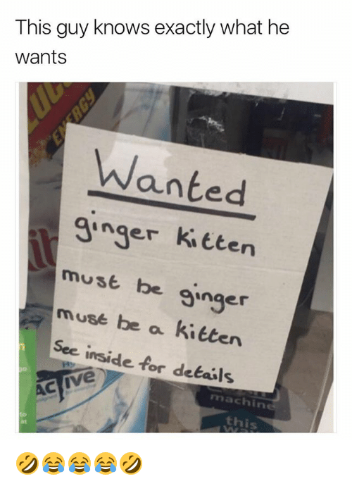 Muse, Girl Memes, and Sec: This guy knows exactly what he  wants  Wanted  ginger ki tten  must be ginger  muse be a kitten  Sec inside for dekails  machine  this  at 🤣😂😂😂🤣