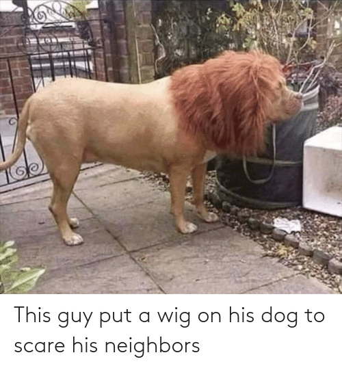 Scare: This guy put a wig on his dog to scare his neighbors