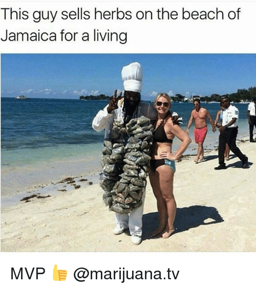 Memes, Beach, and Jamaica: This guy sells herbs on the beach of  Jamaica for a living MVP 👍 @marijuana.tv