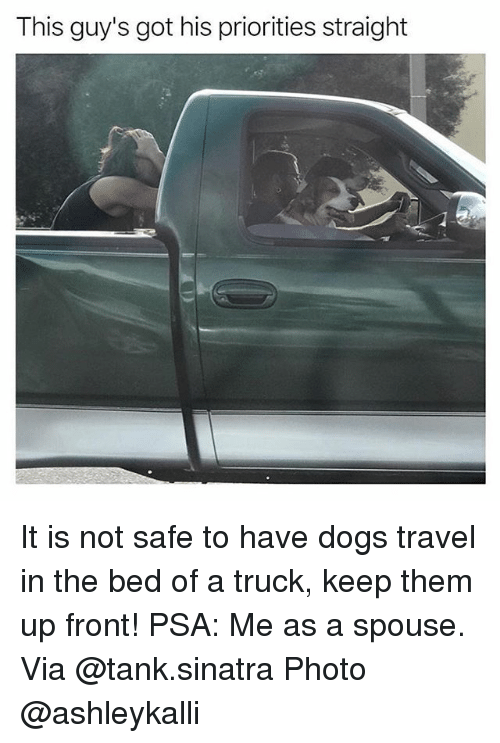 Fronting: This guy's got his priorities straight It is not safe to have dogs travel in the bed of a truck, keep them up front! PSA: Me as a spouse. Via @tank.sinatra Photo @ashleykalli