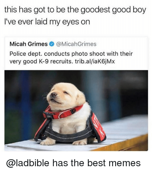 Funny, Memes, and Police: this has got to be the goodest good boy  I've ever laid my eyes on  Micah Grimes@MicahGrimes  Police dept. conducts photo shoot with their  very good K-9 recruits. trib.al/iaK6jMx @ladbible has the best memes