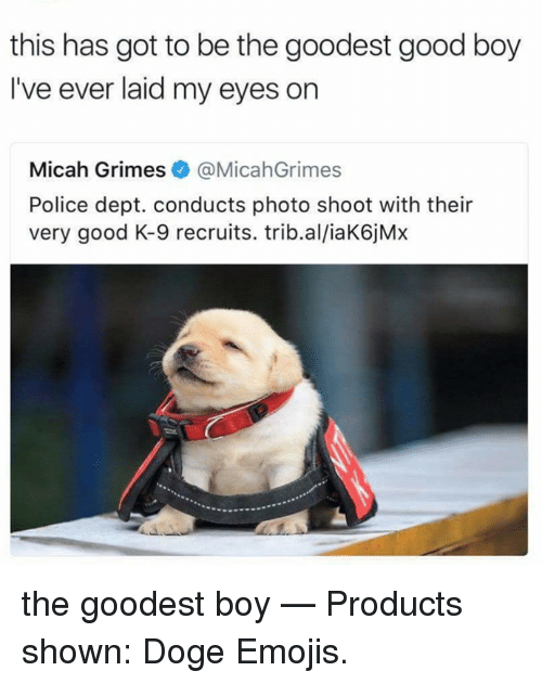 Dogee: this has got to be the goodest good boy  I've ever laid my eyes on  Micah Grimes@MicahGrimes  Police dept. conducts photo shoot with their  very good K-9 recruits. trib.al/iaK6jMx the goodest boy   — Products shown: Doge Emojis.