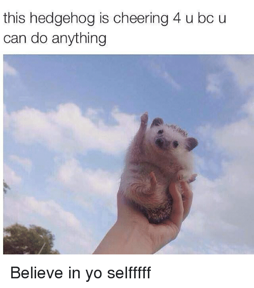 Funny, Yo, and Hedgehog: this hedgehog is cheering 4 u bc u  can do anything Believe in yo selfffff