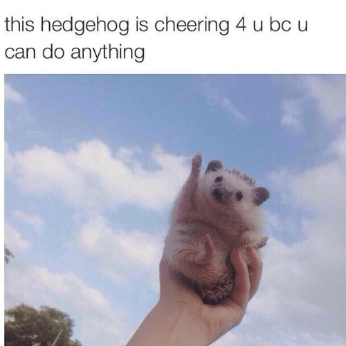 cheering: this hedgehog is cheering 4 u bc u  can do anything
