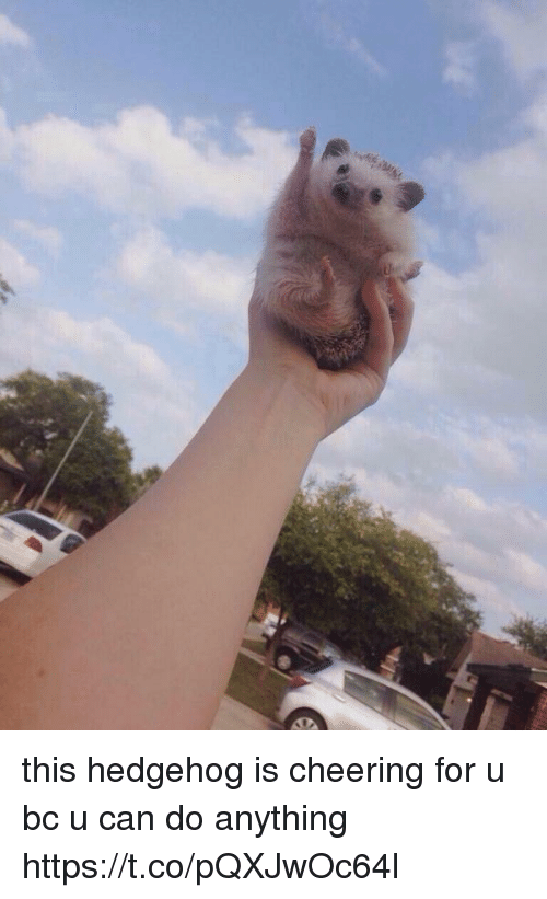 Hedgehoging: this hedgehog is cheering for u bc u can do anything https://t.co/pQXJwOc64l