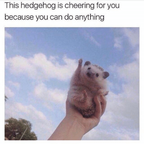 Hedgehoging: This hedgehog is cheering for you  because you can do anything