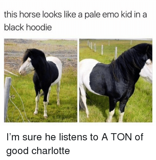 Emo, Funny, and Black: this horse looks like a pale emo kid in a  black hoodie I'm sure he listens to A TON of good charlotte