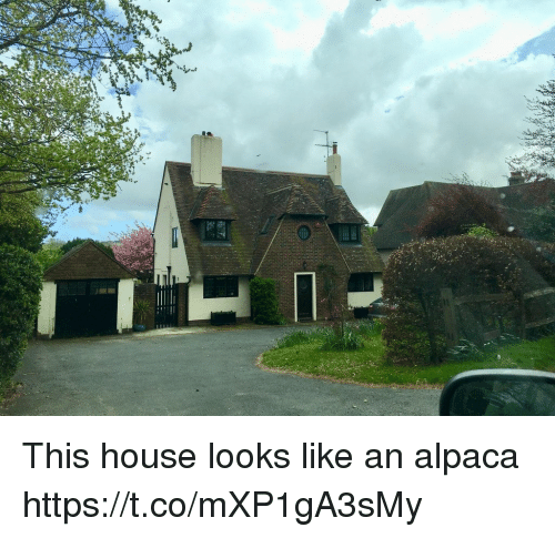 House, Faces-In-Things, and Alpaca: This house looks like an alpaca https://t.co/mXP1gA3sMy