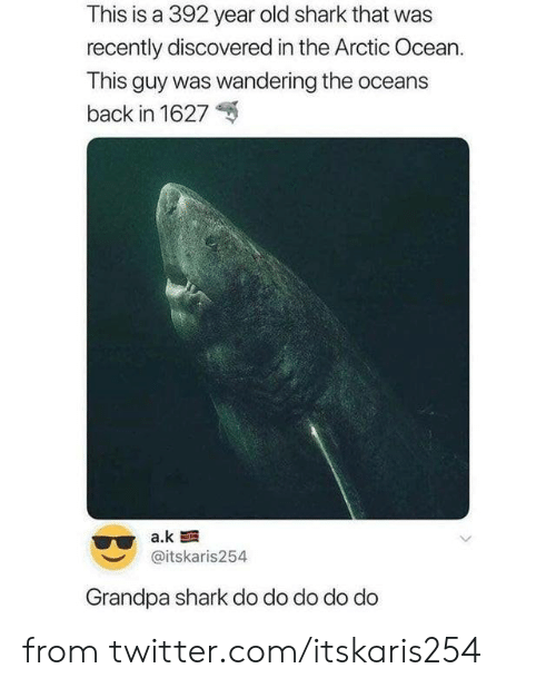 wandering: This is a 392 year old shark that was  recently discovered in the Arctic Ocean.  This guy was wandering the oceans  back in 1627  a.k  @itskaris254  Grandpa shark do do do do do from twitter.com/itskaris254