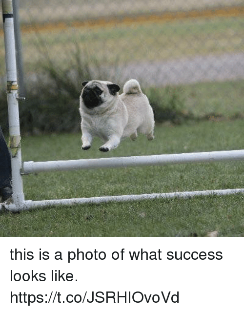 Girl Memes, Success, and Photos: this is a photo of what success looks like. https://t.co/JSRHIOvoVd