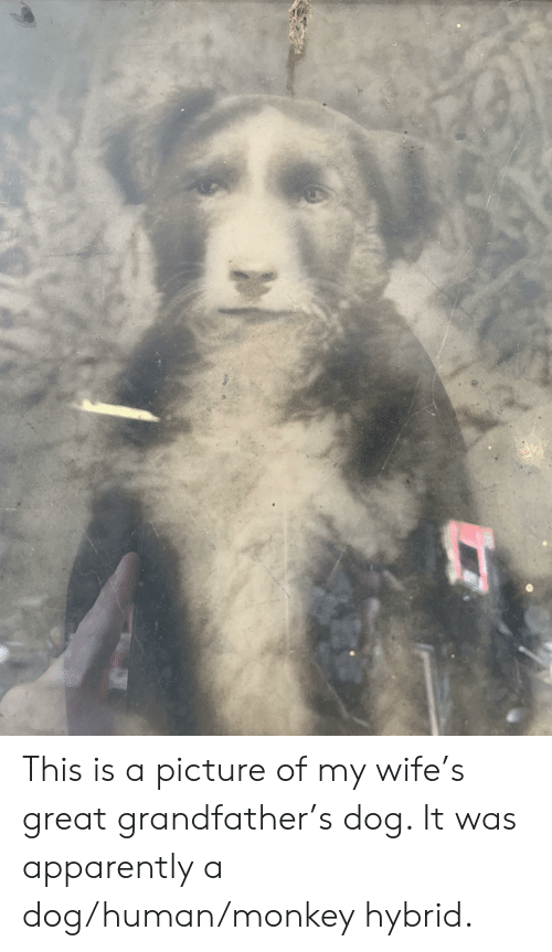 Picture Of My Wife: This is a picture of my wife's great grandfather's dog. It was apparently a dog/human/monkey hybrid.