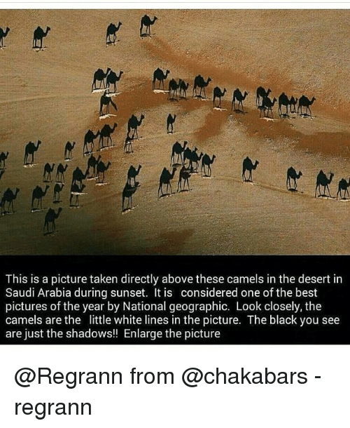 Best Pictures: This is a picture taken directly above these camels in the desert in  Saudi Arabia during sunset. It is considered one of the best  pictures of the year by National geographic. Look closely, the  camels are the little white lines in the picture. The black you see  are just the shadows!! Enlarge the picture @Regrann from @chakabars - regrann