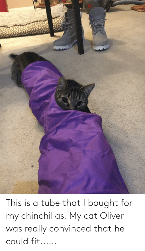 Tube: This is a tube that I bought for my chinchillas. My cat Oliver was really convinced that he could fit......