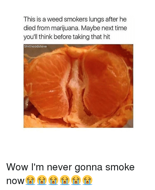 This Is a Weed Smokers Lungs After He Died From Marijuana ...