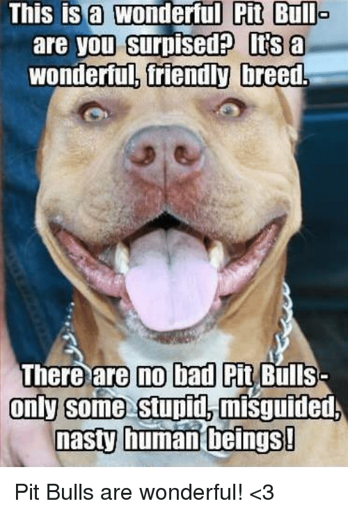 Memes, Nasty, and Nasty: This is a  wonderful Pit Bull  are you surpisedP Its a  wonderful, friendly  breed.  There are no bad Pit Bulls  only some stupid,  misguided  nasty human beings! Pit Bulls are wonderful! <3