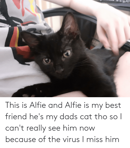 dads: This is Alfie and Alfie is my best friend he's my dads cat tho so I can't really see him now because of the virus I miss him