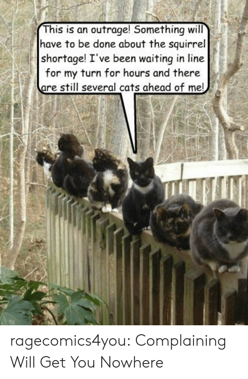 This Is An Outrage: This is an outrage! Something will  have to be done about the squirrel  shortage! I've been waiting in line  for my turn for hours and there  are still several cats ahead of me! ragecomics4you:  Complaining Will Get You Nowhere
