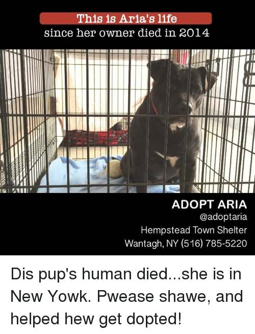 This Is Aria's Life Since Her Owner Died in RO14 ADOPT ARIA ...