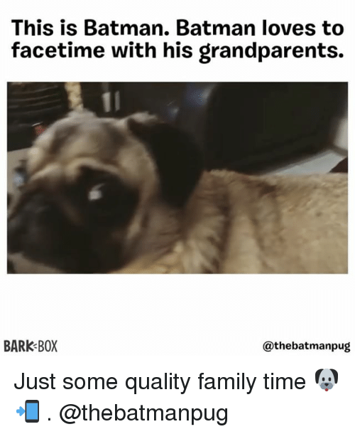 Batman, Facetime, and Family: This is Batman. Batman loves to  facetime with his grandparents.  BARK BOX  @thebatmanpug Just some quality family time 🐶📲 . @thebatmanpug