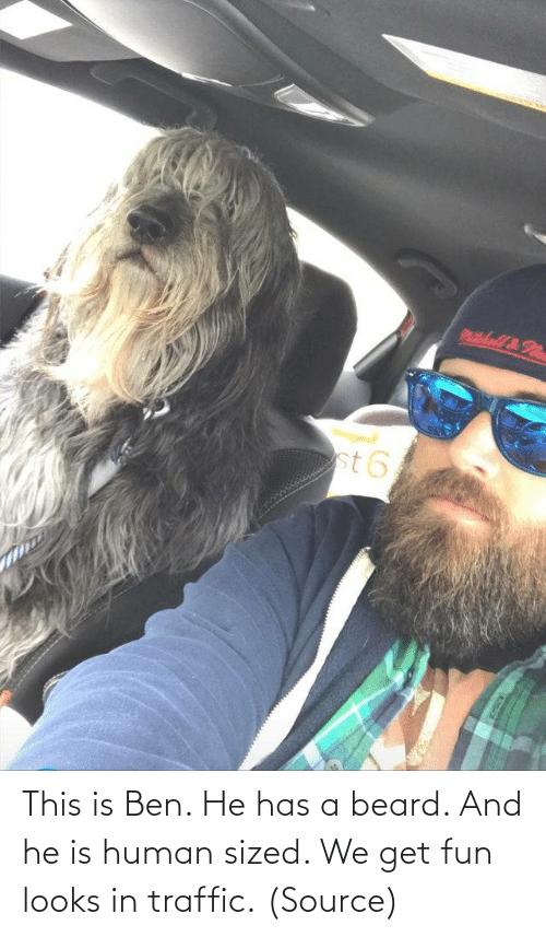 fun: This is Ben. He has a beard. And he is human sized. We get fun looks in traffic. (Source)