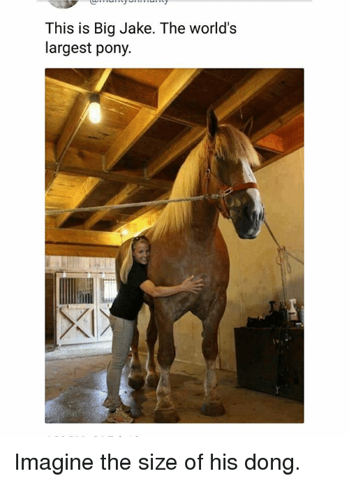 Memes, 🤖, and Pony: This is Big Jake. The world's  largest pony Imagine the size of his dong.