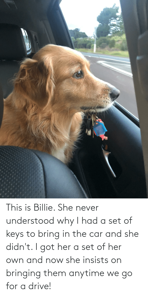 keys: This is Billie. She never understood why I had a set of keys to bring in the car and she didn't. I got her a set of her own and now she insists on bringing them anytime we go for a drive!
