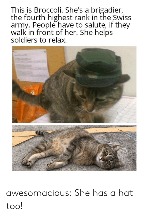 Soldiers, Tumblr, and Army: This is Broccoli. She's a brigadier,  the fourth highest rank in the Swiss  army. People have to salute, if they  walk in front of her. She helps  soldiers to relax. awesomacious:  She has a hat too!