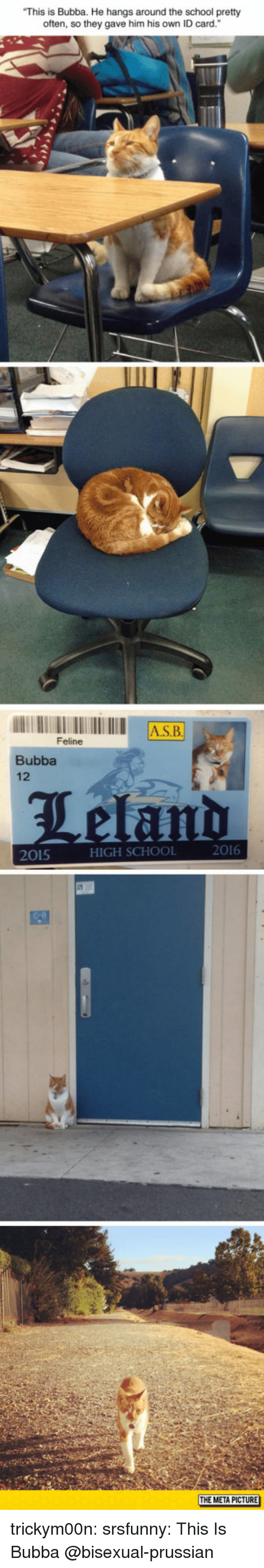 """Bubba: This is Bubba. He hangs around the school pretty  often, so they gave him his own ID card.""""  AS.B  Feline  Bubba  12  2016  2015  HIGH SCHOOL  THE META PICTURE trickym00n:  srsfunny:  This Is Bubba  @bisexual-prussian"""