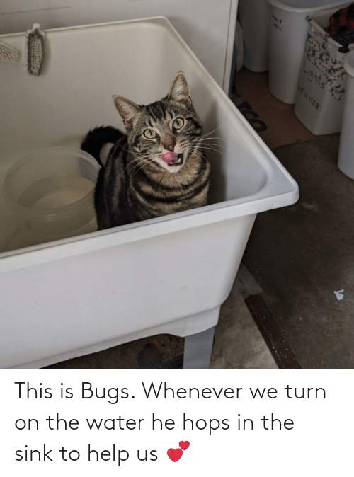 hops: This is Bugs. Whenever we turn on the water he hops in the sink to help us 💕