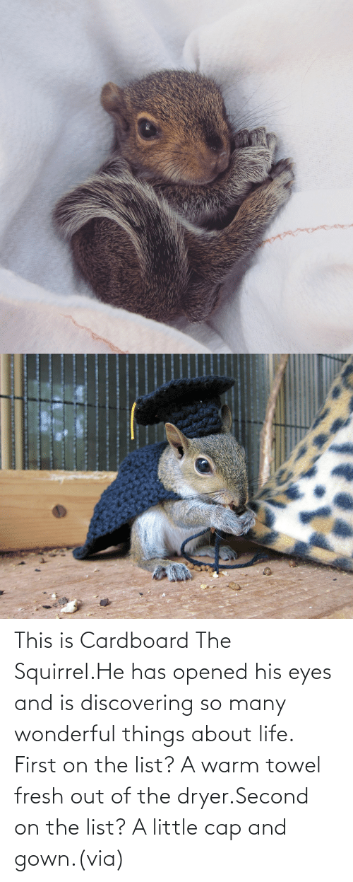 He Has: This is Cardboard The Squirrel.He has opened his eyes and is discovering so many wonderful things about life. First on the list? A warm towel fresh out of the dryer.Second on the list? A little cap and gown.(via)