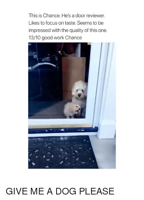 good work: This is Chance. He's a door reviewer.  Likes to focus on taste. Seems to be  impressed with the quality of this one.  13/10 good work Chance GIVE ME A DOG PLEASE