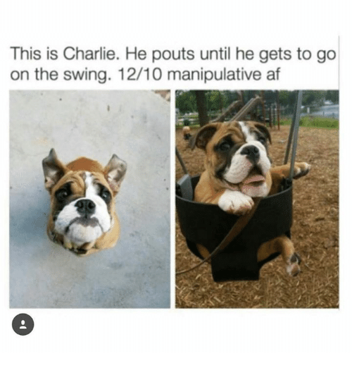 Af, Charlie, and Humans of Tumblr: This is Charlie. He pouts until he gets to go  on the swing. 12/10 manipulative af