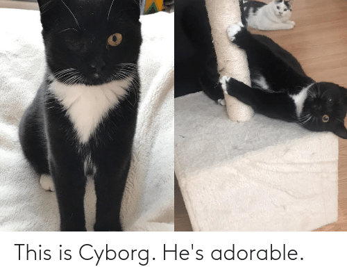 cyborg: This is Cyborg. He's adorable.