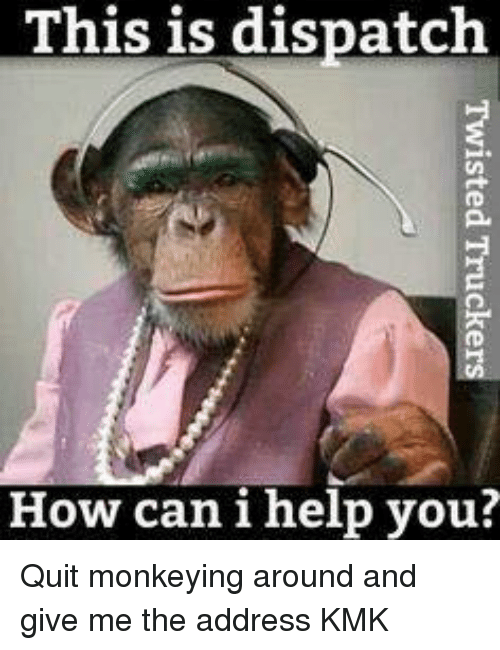 funny pic of monkey