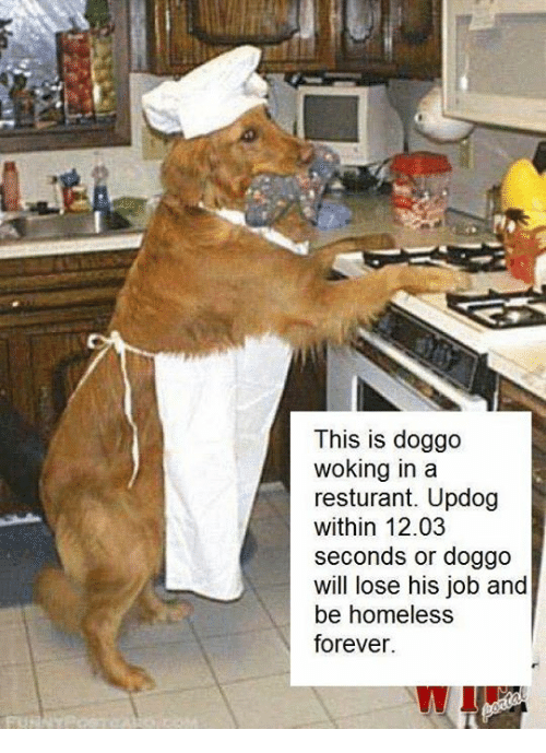 Homeless, Forever, and Jobs: This is doggo  woking in a  resturant. Updog  within 12.03  seconds or doggo  will lose his job and  be homeless  forever.