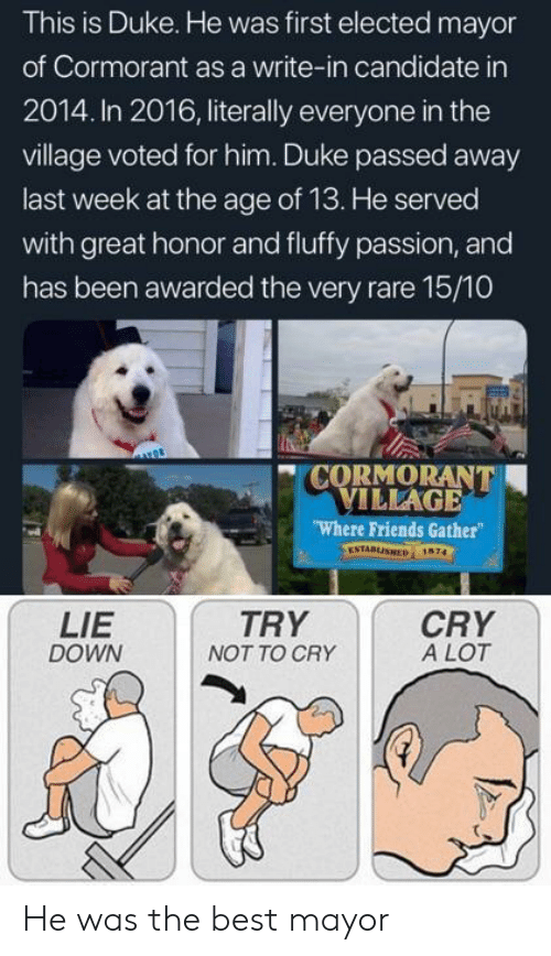 The Village: This is Duke. He was first elected mayor  of Cormorant as a write-in candidate in  2014. In 2016, literally everyone in the  village voted for him. Duke passed away  last week at the age of 13. He served  with great honor and fluffy passion, and  has been awarded the very rare 15/10  CORMORANT  VILLAGE  Where Friends Gather  ESTABLISHED 1674  LIE  DOWN  TRY  NOT TO CRY  CRY  A LOT He was the best mayor