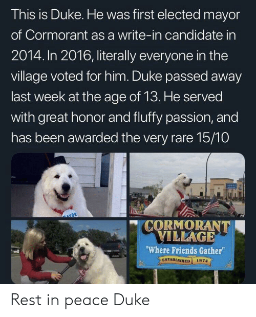 """The Village: This is Duke. He was first elected mayor  of Cormorant as a write-in candidate in  2014. In 2016, literally everyone in the  village voted for him. Duke passed away  last week at the age of 13. He served  with great honor and fluffy passion, and  has been awarded the very rare 15/10  CORMORANT  ILLAGE  Where Friends Gather""""  ESTABLISHED 1874  el Rest in peace Duke"""