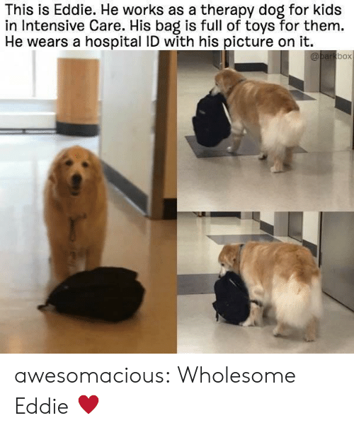 Eddie: This is Eddie. He works as a therapy dog for kids  in Intensive Care. His bag is full of toys for them.  He wears a hospital ID with his picture on it.  box awesomacious:  Wholesome Eddie ♥️